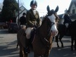 All Rounder horse - 9 yrs 10 mths 14.1 hh Chestnut - Warwickshire