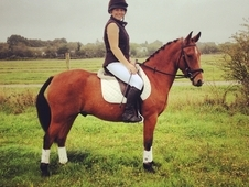 Young Pony Club All-rounder/superb Dressage Prospect