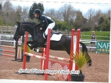 All Rounder horse - 5 yrs 15.2 hh Black - South Glamorgan