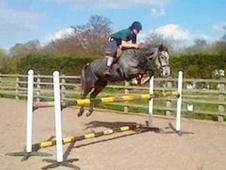 All Rounder horse - 5 yrs 15.0 hh Steel Grey - Cheshire
