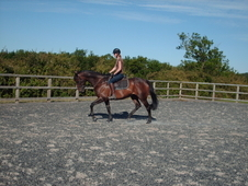 Handsome Gelding For A Lady Rider.
