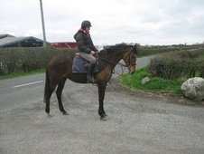 All Rounder horse - 8 yrs 15.2 hh Bay - Lancashire