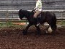 All Rounder horse - 3 yrs 2 mths 13.0 hh Black - Gloucestershire