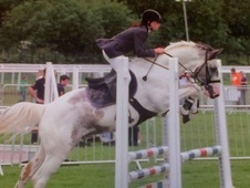 All Rounder horse - 8 yrs 15.1 hh Blue & White - Cheshire