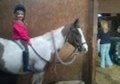 All Rounder horse - 8 yrs 1 mth 13.1 hh Skewbald - Gloucestershire