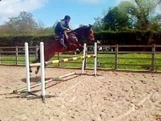 All Rounder horse - 10 yrs 14.2 hh Bay - Cheshire