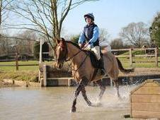 15. 2HH PROVEN EVENTER/PC/BE/RC ALLROUNDER