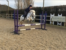 138cm fun, talented, pony