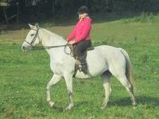 lovely tb mare