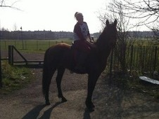 4 leaf clover sport horse x