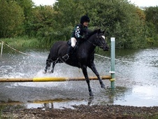 Pony Club Ponies horse - 9 yrs 13.0 hh Black - Lincolnshire