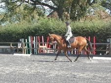 Other horse - 12 yrs 15.3 hh Bay - Oxfordshire
