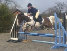All Rounder horse - 5 yrs 13.2 hh Skewbald - Cheshire