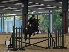 School Masters horse - 16 yrs 2 mths 16.1 hh Black - Cambridgeshire