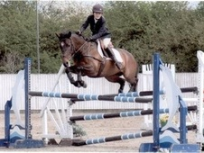 Show Jumpers horse - 10 yrs 14.1 hh Bay - Shropshire
