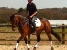 All Rounder horse - 5 yrs 15.2 hh Bay - Hampshire