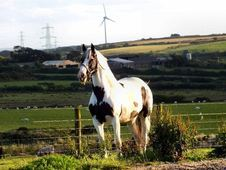 All Rounder horse - 8 yrs 16.1 hh  - South Humberside