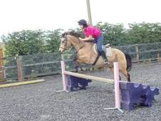 13. 2h Show Jumping/games Pony For Sale