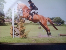 Super Hunter /eventer 16. 2 Irish Mare