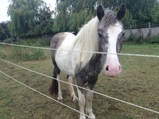 2 ½ Year Old Coloured Mare