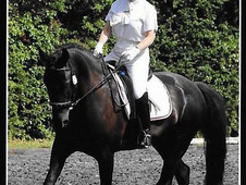 15. 2 Black Irish Sport horse
