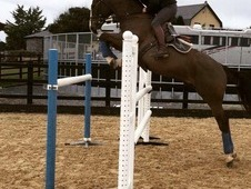 PROVEN 1. 30M SHOW JUMPER / TOP YOUNG RIDERS HORSE