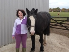 All Rounder horse - 16 yrs 11 mths 15.2 hh Black - Cambridgeshire