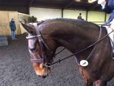 15. 2hh TB Bay Mare 7 years old.