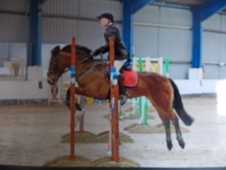 Fabulous allrounder pony price reduced