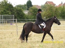 All Rounder horse - 12 yrs 13.3 hh Black - Kent