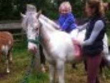 All Rounder horse - 2 yrs 4 mths 14.2 hh Appaloosa - Gloucestershire
