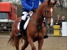 Show Jumpers horse - 8 yrs 1 mth 16.2 hh Chestnut - Surrey