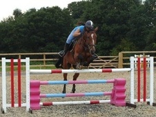 All Rounder horse - 9 yrs 11 mths 17.0 hh Bay - Essex