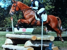 Eventers horse - 9 yrs 16.1 hh Chestnut - Buckinghamshire