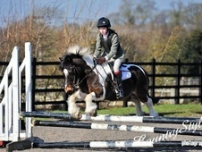 All Rounder horse - 16 yrs 12.3 hh Skewbald - Cheshire