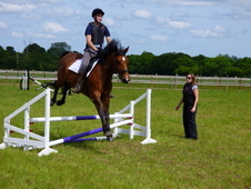 Gorgeous 15. 2hh Irish Sports Horse Bay Mare. Rising 12.