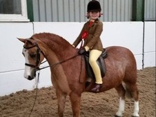 Sec a shp leadrein/open PC pony for sale