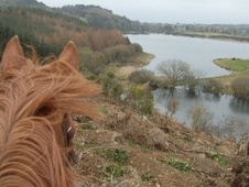 Horse & Pony Trekking - County Down