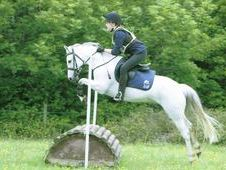 Stunning 13hh Grey Welsh Section B Gelding