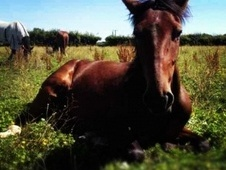 Potential young sports horses horse - 5 yrs 14.3 hh Bay - South G...