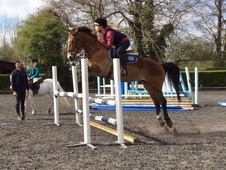 13. 2, 7 Year Old Competition Pony