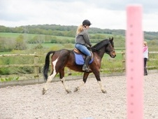 All Rounder horse - 8 yrs 14.2 hh Skewbald - East Sussex