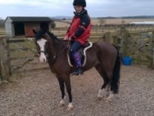 All Rounder horse - 10 yrs 12.2 hh Bright Bay - Northumberland