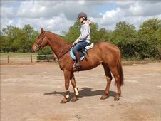 All Rounder horse - 5 yrs 15.3 hh Chestnut - Kent
