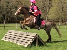 Perfect Pony For Sale