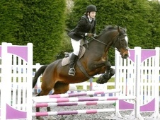 All Rounder horse - 14 yrs 16.2 hh Bay - Buckinghamshire