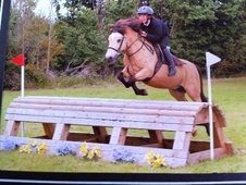 All Rounder horse - 12 yrs 12.0 hh Dun - Worcestershire