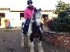 All Rounder horse - 6 yrs 14.1 hh Coloured - West Midlands