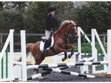 Talented Show Jumping And Allrounder
