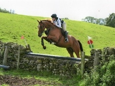 Performance Horses horse - 9 yrs 16.1 hh Chestnut - Northumberland